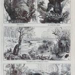 állatlakások eredeti nyomat