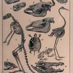 állati csontvázak