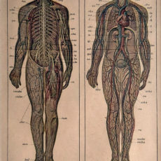 eredeti ember idegrendszer nyomat