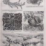hangyák és növények eredeti nyomat