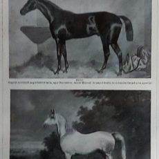lovak eredeti nyomat