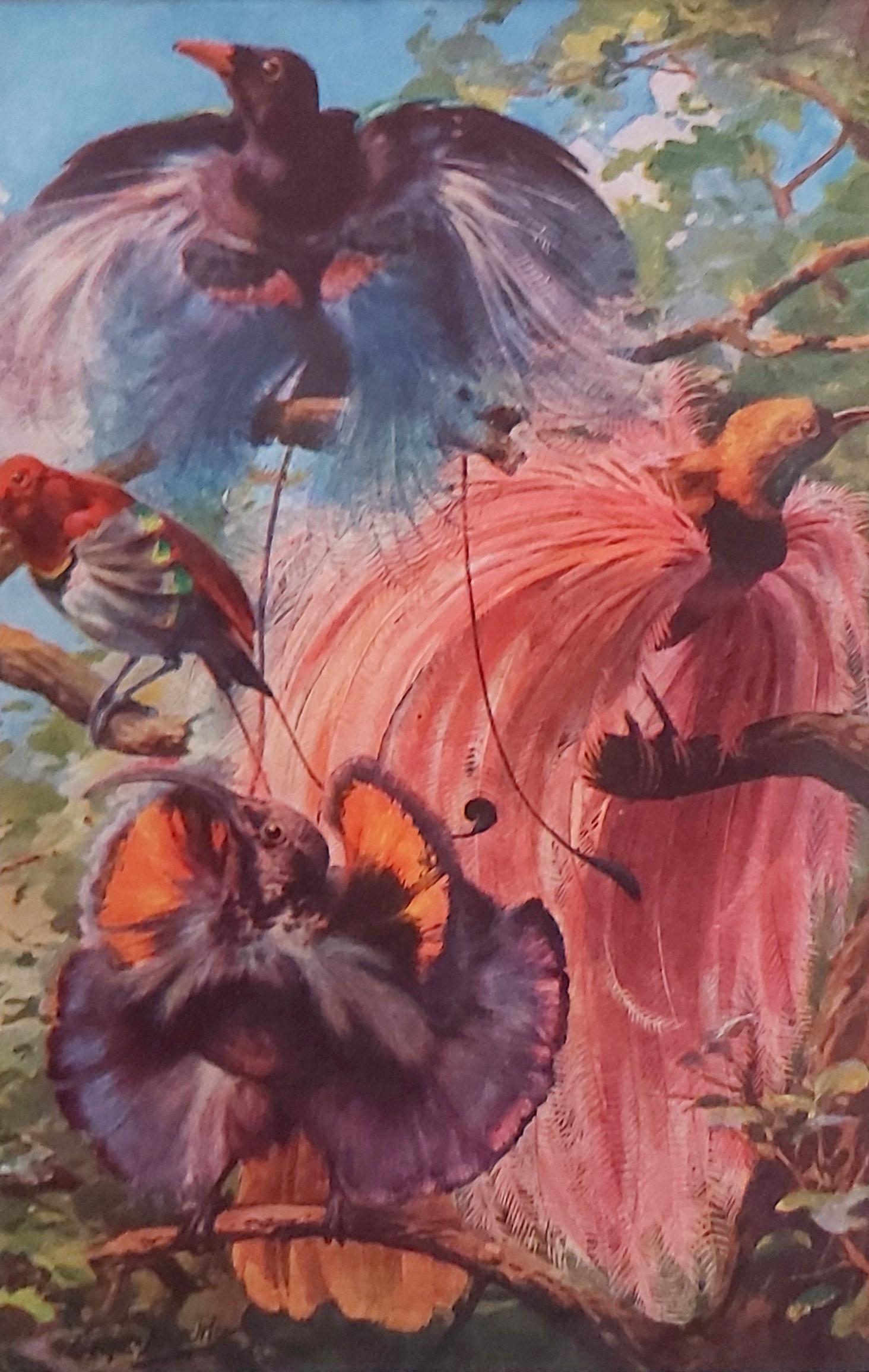 paradicsommadarak eredeti nyomat