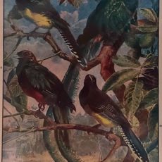 egzotikus madarak eredeti nyomat