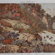 hegyi növények eredeti nyomat