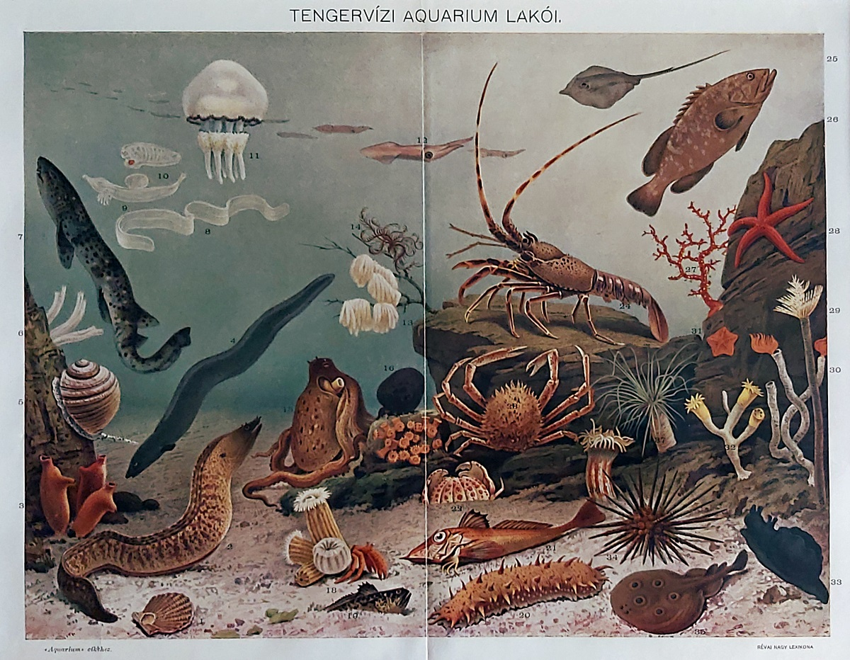 tengeri állatok eredeti nyomat