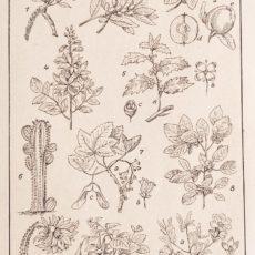 Növényvilág 2. eredeti régi nyomat