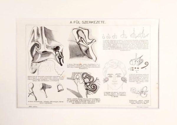 fül orvosi eredeti régi nyomat