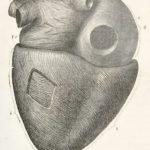 szív eredeti régi nyomat